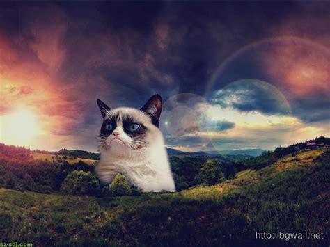 cat wallpaper for mac grumpy cat become hill image desktop wallpaper mac