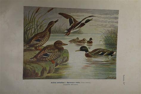 mobili martorelli martorelli giacinto gli uccelli d italia