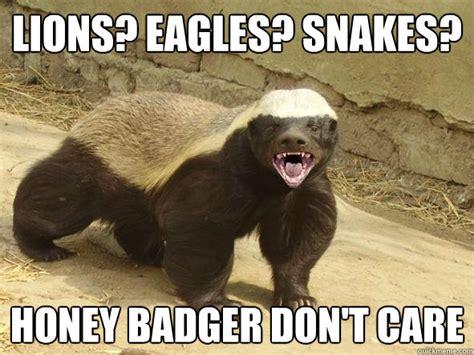 Badger Memes - lions eagles snakes honey badger don t care