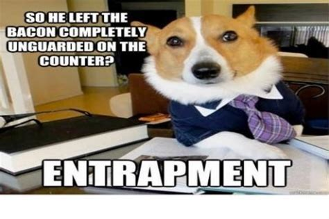 Dog Lawyer Meme - lawyer dog meme