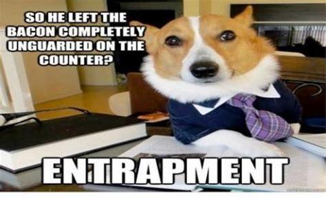 Lawyer Dog Memes - lawyer dog meme