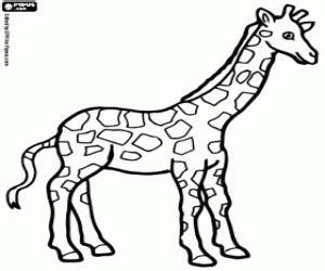 imagenes de jirafas para pintar juegos de jirafas para colorear imprimir y pintar