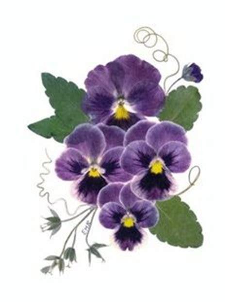 pressed pressedatlcom 1000 images about pressed flowers on pinterest flower