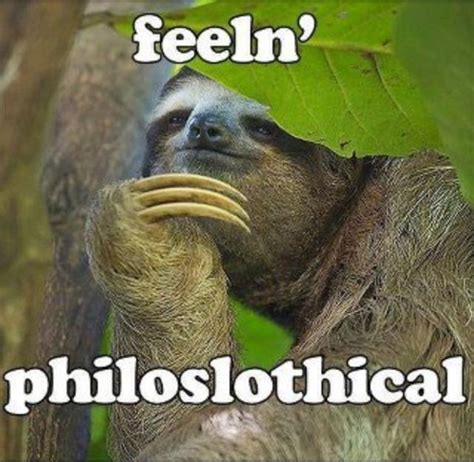 Sloths Meme - how about no sloth quotes