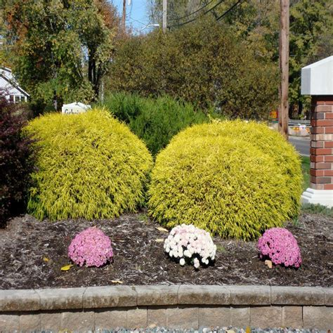 flowering ground cover perennial the home depot