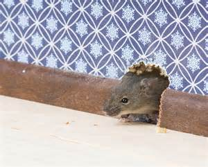 rodents fort wayne allen county department of health