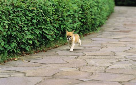 dogs in pretty dogs in garden dogs wallpaper 13905908 fanpop