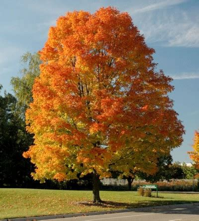 introducing michigan s fall color lineup msu extension