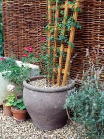 Trellis For Potted Plants How To Grow Flowering Vines In Containers Hgtv