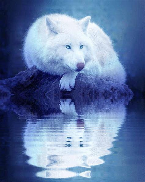 wolf gif  gifer  vonris