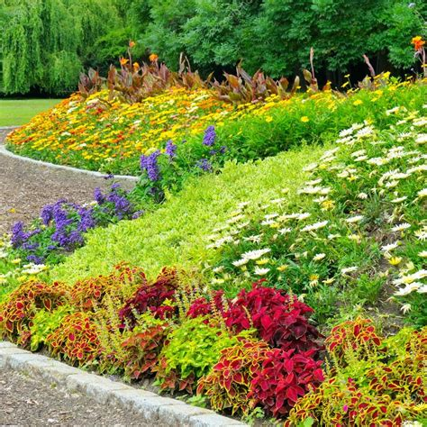 bed in summer delightful flower bed in the summer park stock photo 169 alinamd 20753513