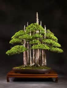 choosing a bonsai pot for your tree bonsai empire chinese bonsai planter at 1stdibs