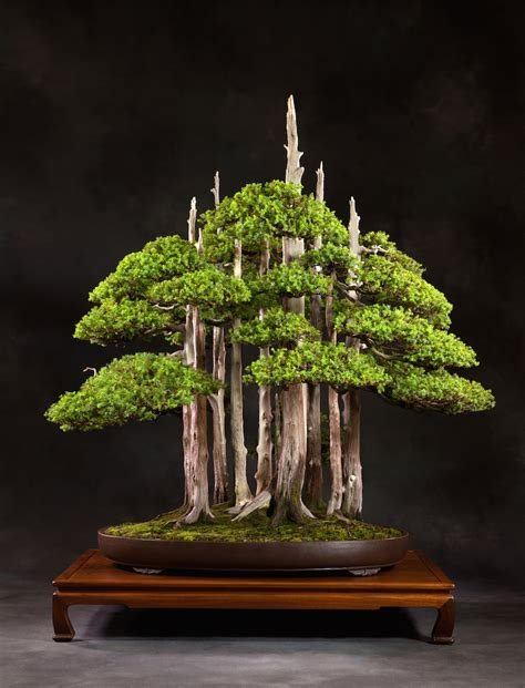 vasi x bonsai choosing a bonsai pot for your tree bonsai empire