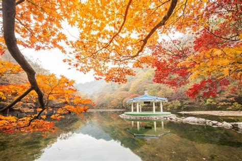ultimate guide  autumn  korea fall foliage
