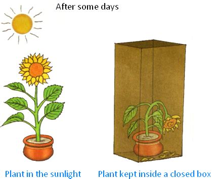 which plants can survive without sunlight what plants can do for us where do plants get their