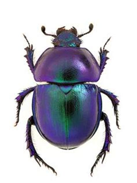 blue scarab tattoo as soon as i saw a scarab like this one i knew that i had