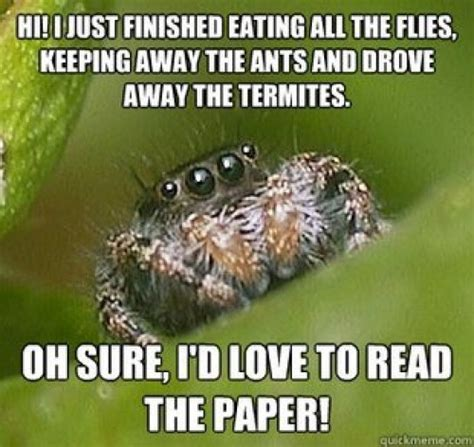 Spider In House Meme - the best of the quot misunderstood spider quot meme 19 pics