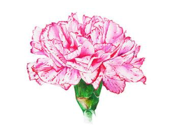 carnation clipart pink carnation pencil and in color