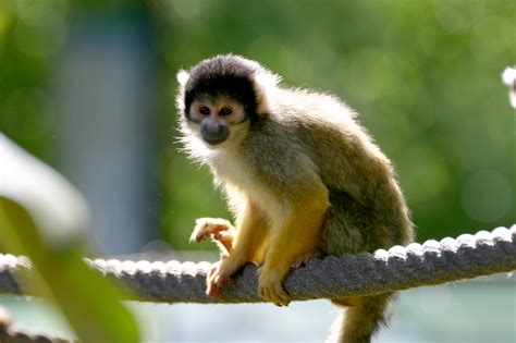 small monkey by cenkini on deviantart