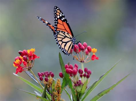 Butterfly Gardens by Bangkok Butterfly Garden Insectarium Asia Travel
