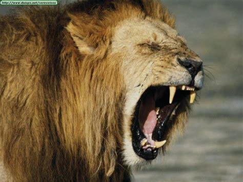 imagenes de leones asesinos circos asesinos taringa