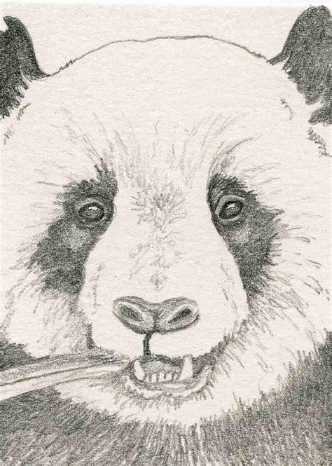 imagenes a lapiz de osos oso panda dibujo lapiz imagui