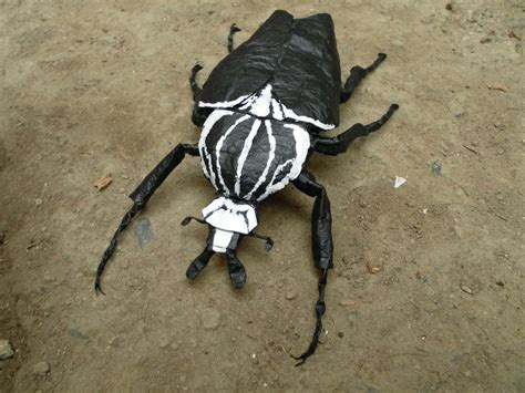 Origami Beetle - living with insects exploring the intersections of