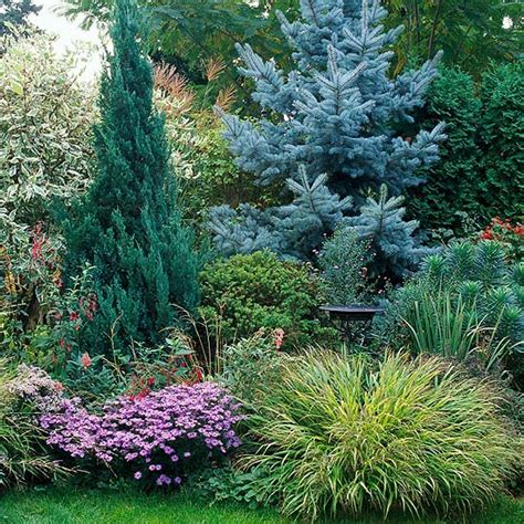 Evergreen Landscaping Ideas Best 25 Evergreen Garden Ideas On Pinterest Evergreen Landscape Small Evergreen Garden Ideas