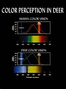 what colors do deer see does camo really help page 4 huntingnet forums