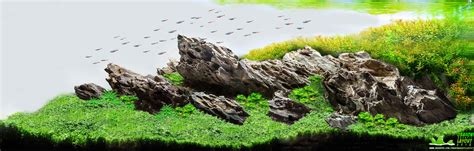 ada ohko stone aquascape dragon stone aquascape