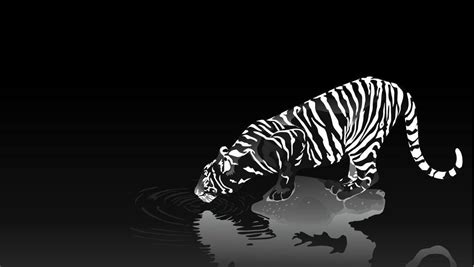 wallpaper hd black tiger tigers high definition wallpapers free download page 5