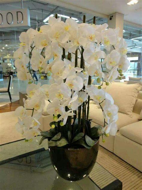 wohnung dekorieren ideen 5716 white phalaenopsis orchideak orchideen