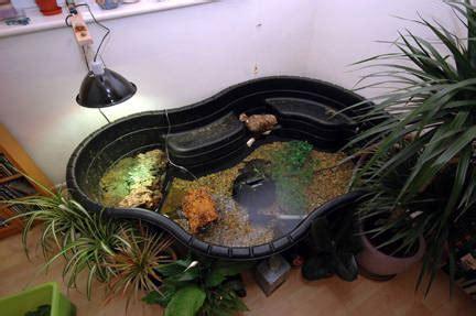 tartarughe in casa costruire laghetto artificiale in casa tartarughe d acqua