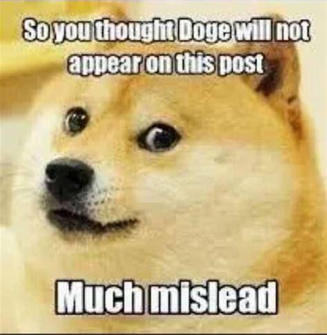 Doge Pronunciation Meme - very surprise how doge such picture wow pinterest
