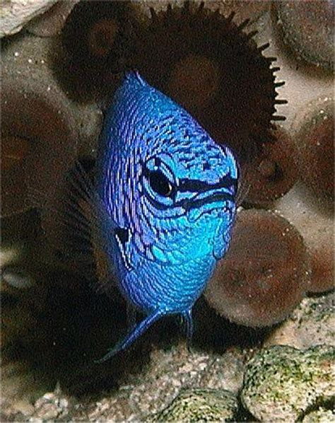 Lu Neon Akuarium 67 best saltwater tank and fish images on