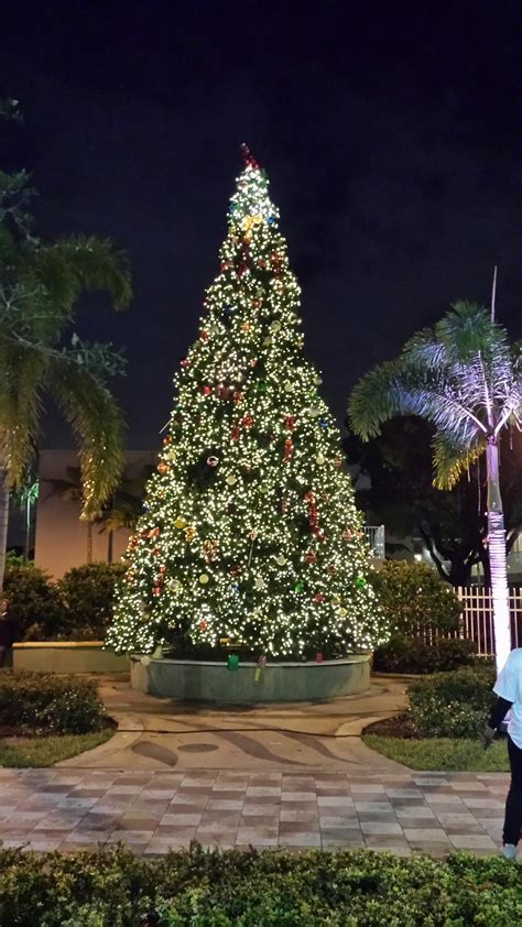 Broward County Tree Giveaway - city of fort lauderdale fl event calendar