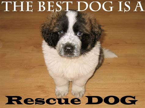 adopt puppies inspirational rescue quotes what every deserves