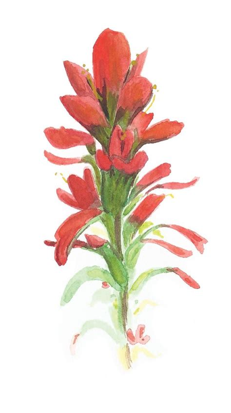 watercolor tattoo wildflowers indian paintbrush watercolor painting search