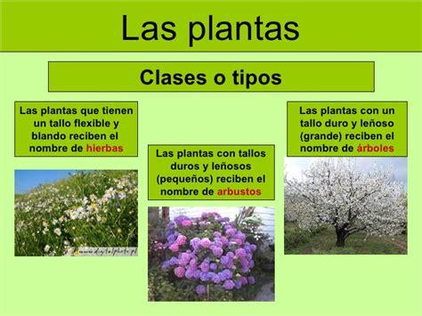 imagenes de flores y arboles tipos de plantas pino flores classmates