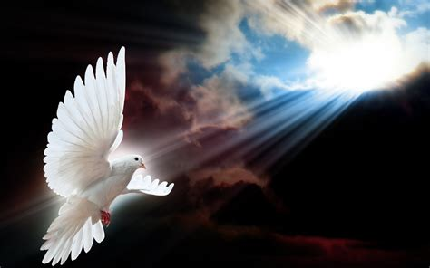 imagenes de espiritu santo paloma recipe dishmaps