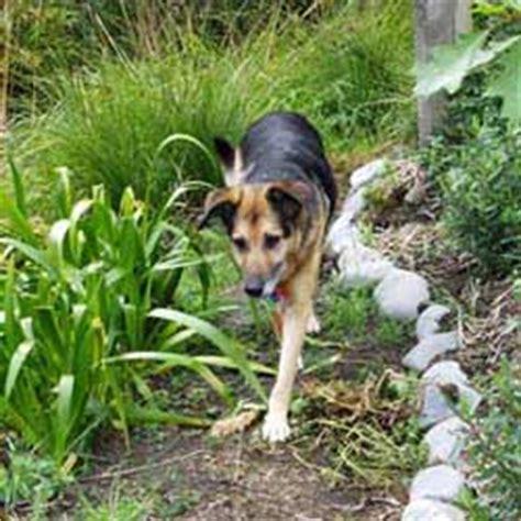 backyard breeders aspca the ultimate yard house plans