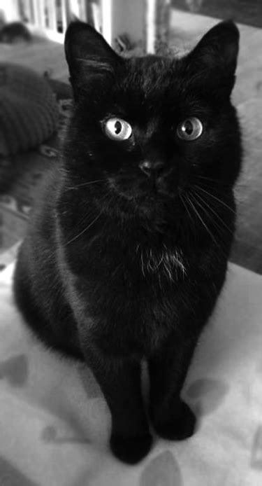 THE MYSTERIOUS WHITE SPOT ON BLACK CATS