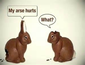 Chocolate Easter Bunny Meme - my arse hurts what chocolate bunnies cute pics