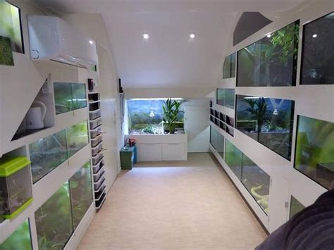Reptile Rooms by Best 25 Reptile Cage Ideas On Iguana Cage