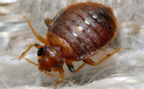 bed bug success stories bed bug success stories 28 images bed bug success