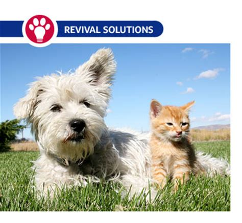 puppies and worming schedule worming schedule for puppies kittens cats dogs deworming puppies