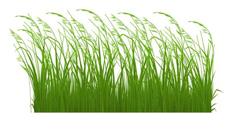 grass clipart free free grass clip pictures clipartix