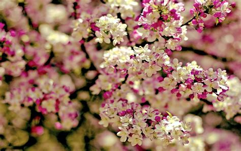 spring florals tired of winter get ready for spring with these 48 hd