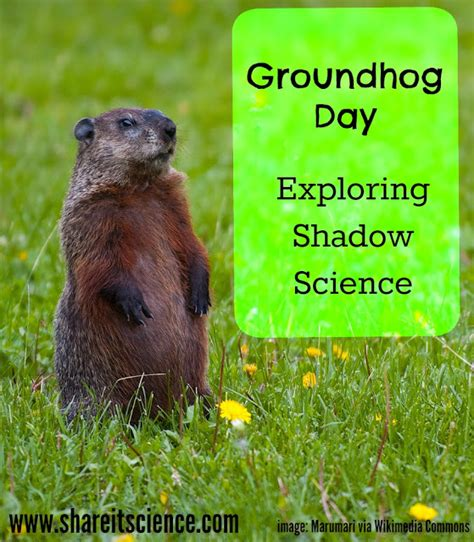 groundhog day shadow it science news saturday science experiment