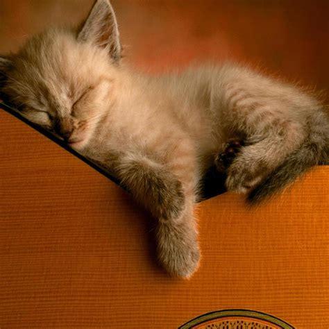 cat guitar wallpaper 1024x1024 little cat sleep on guitar backgrounds for ipad